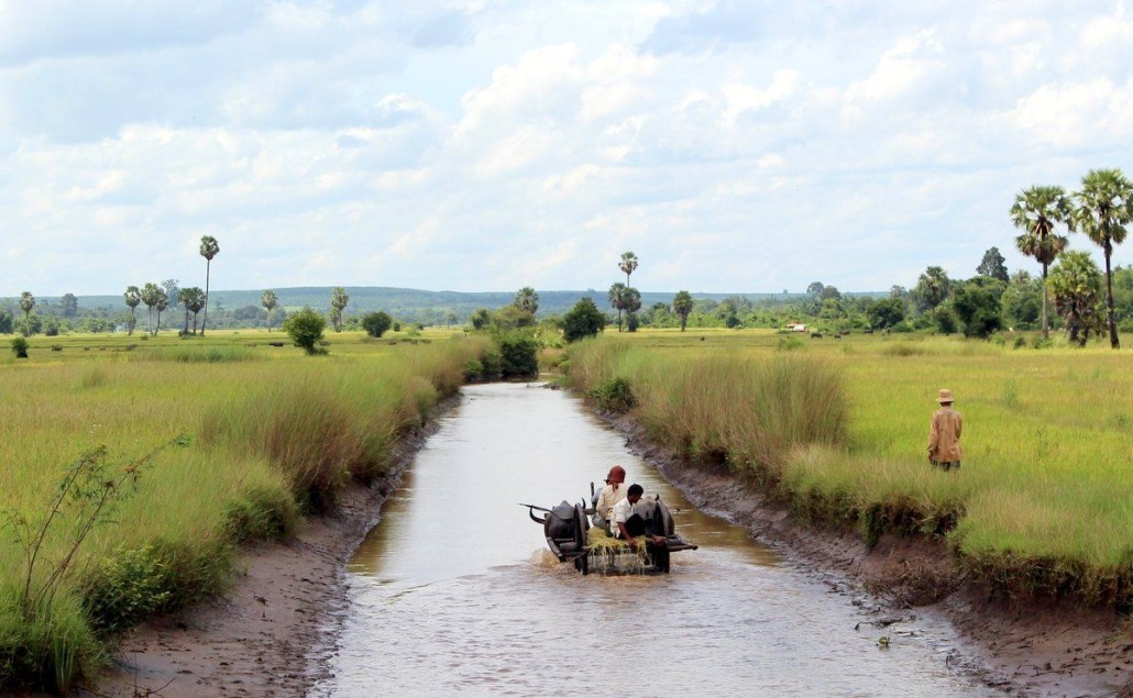 Bullock Cart in the Paddy Fields